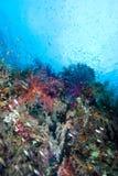 Kleurrijke tropische ertsaderscène Royalty-vrije Stock Fotografie