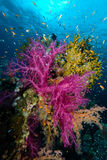 Kleurrijke tropische ertsaderscène Royalty-vrije Stock Afbeelding