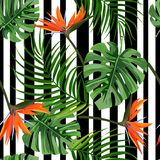 Kleurrijke tropische installatieachtergrond Naadloos patroon met monstera, palmbladen en paradijsvogel royalty-vrije illustratie