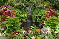Kleurrijke tropische tuin stock fotografie