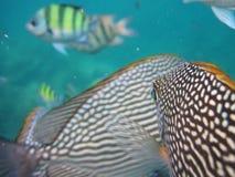 Kleurrijke tropische vissen Stock Foto's