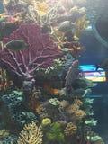 Kleurrijke tropische vissen en ertsader royalty-vrije stock foto