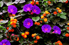 Kleurrijke tuin Stock Afbeeldingen
