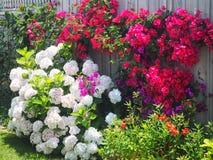 Kleurrijke Tuin Royalty-vrije Stock Afbeeldingen