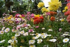 Kleurrijke Tuin Stock Foto's