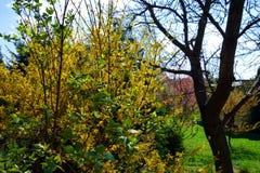 Kleurrijke tuin op de lente Stock Afbeelding