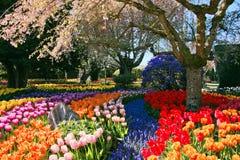 Kleurrijke tuinbloemen Royalty-vrije Stock Afbeeldingen