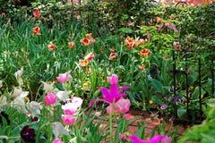 Kleurrijke tulpen in bloembed in Washington DC Stock Foto