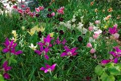 Kleurrijke tulpen in een bloembed in Washington DC Royalty-vrije Stock Afbeeldingen