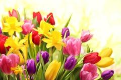 Kleurrijke tulpen en gele narcissen Royalty-vrije Stock Foto's