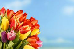 Kleurrijke tulpen op blauwe hemelachtergrond Stock Afbeelding