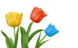 Kleurrijke tulpen op witte achtergrond stock foto's
