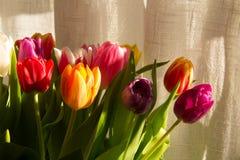 Kleurrijke tulpen in zonlicht Royalty-vrije Stock Fotografie