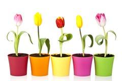 Kleurrijke tulpenbloemen stock foto's