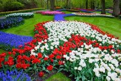 Kleurrijke tulpenbloemen in de lente Stock Afbeeldingen