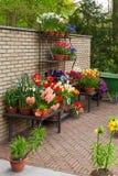 Kleurrijke tulpenbloemen in de lentepark Bloemlandschap Royalty-vrije Stock Foto's