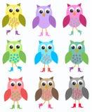 Kleurrijke uilen Stock Foto