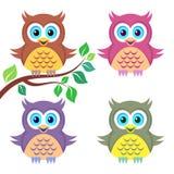 Kleurrijke uilen Stock Foto's