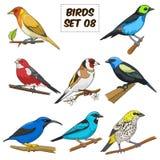 Kleurrijke vectorillustratie van het vogel de vastgestelde beeldverhaal Royalty-vrije Stock Foto's