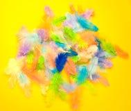 Kleurrijke veer Stock Foto's