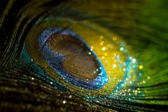 Kleurrijke veerpauw Royalty-vrije Stock Fotografie