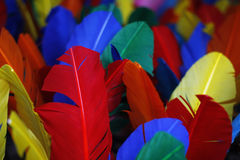 Kleurrijke veren Royalty-vrije Stock Afbeelding