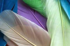 Kleurrijke veren stock fotografie