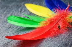 Kleurrijke veren Stock Afbeeldingen