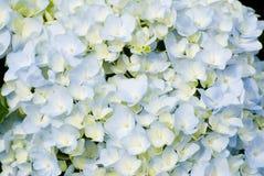 Kleurrijke verse bloemachtergrond Stock Fotografie