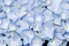 Kleurrijke verse bloemachtergrond Royalty-vrije Stock Foto's
