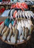 Kleurrijke verse tropische vissen Stock Afbeeldingen
