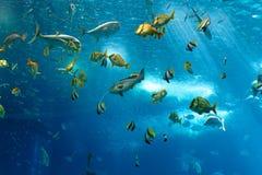 Kleurrijke vissen royalty-vrije stock foto