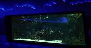 Kleurrijke vissen in aquarium stock footage