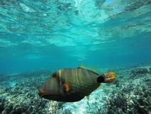 Kleurrijke vissen onder het water Stock Foto