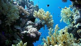 Kleurrijke Vissen op Trillende Coral Reef, Rode overzees stock footage