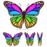 Kleurrijke vlinder vector illustratie