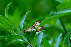 Kleurrijke vlinder stock foto