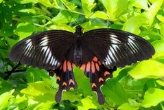 Kleurrijke Vlinder Royalty-vrije Stock Afbeeldingen