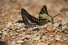 Kleurrijke vlinder stock afbeeldingen
