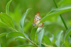 Kleurrijke Vlinder II stock foto