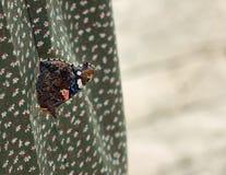 Kleurrijke vlinder met donkere vleugels die op de groene kleding zitten stock afbeeldingen