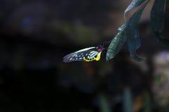 Kleurrijke vlinder op blad Royalty-vrije Stock Afbeeldingen