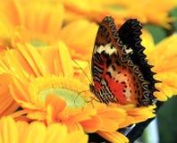 Kleurrijke vlinder op bloem Stock Afbeeldingen