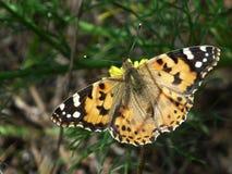 Kleurrijke vlinder op een gele bloem stock fotografie