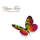 Kleurrijke vlinderachtergrond. Stock Afbeelding
