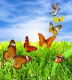 Kleurrijke vlinders met lieveheersbeestje Royalty-vrije Stock Foto's