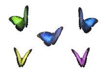 Kleurrijke vlinders op witte achtergrond met cli Stock Afbeeldingen