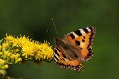 Kleurrijke vlinderzitting op bladeren royalty-vrije stock foto's