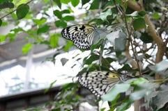 Kleurrijke Vlinderzitting op een Blad Dichte omhoog 10 Royalty-vrije Stock Foto