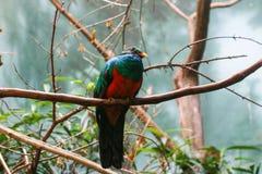 Kleurrijke vogel Royalty-vrije Stock Foto's